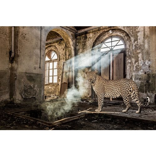 Glasschilderij Panther in vervallen hal 80x120cm,