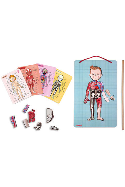 Menselijk lichaam magneetbord