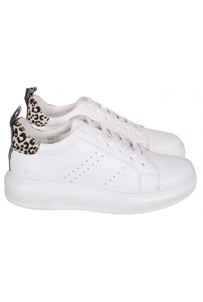 Sneaker cheetah