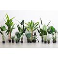 WOOOD Strelitzia Kunstplant Groen 108cm