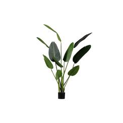 Strelitzia Kunstplant Groen 164cm