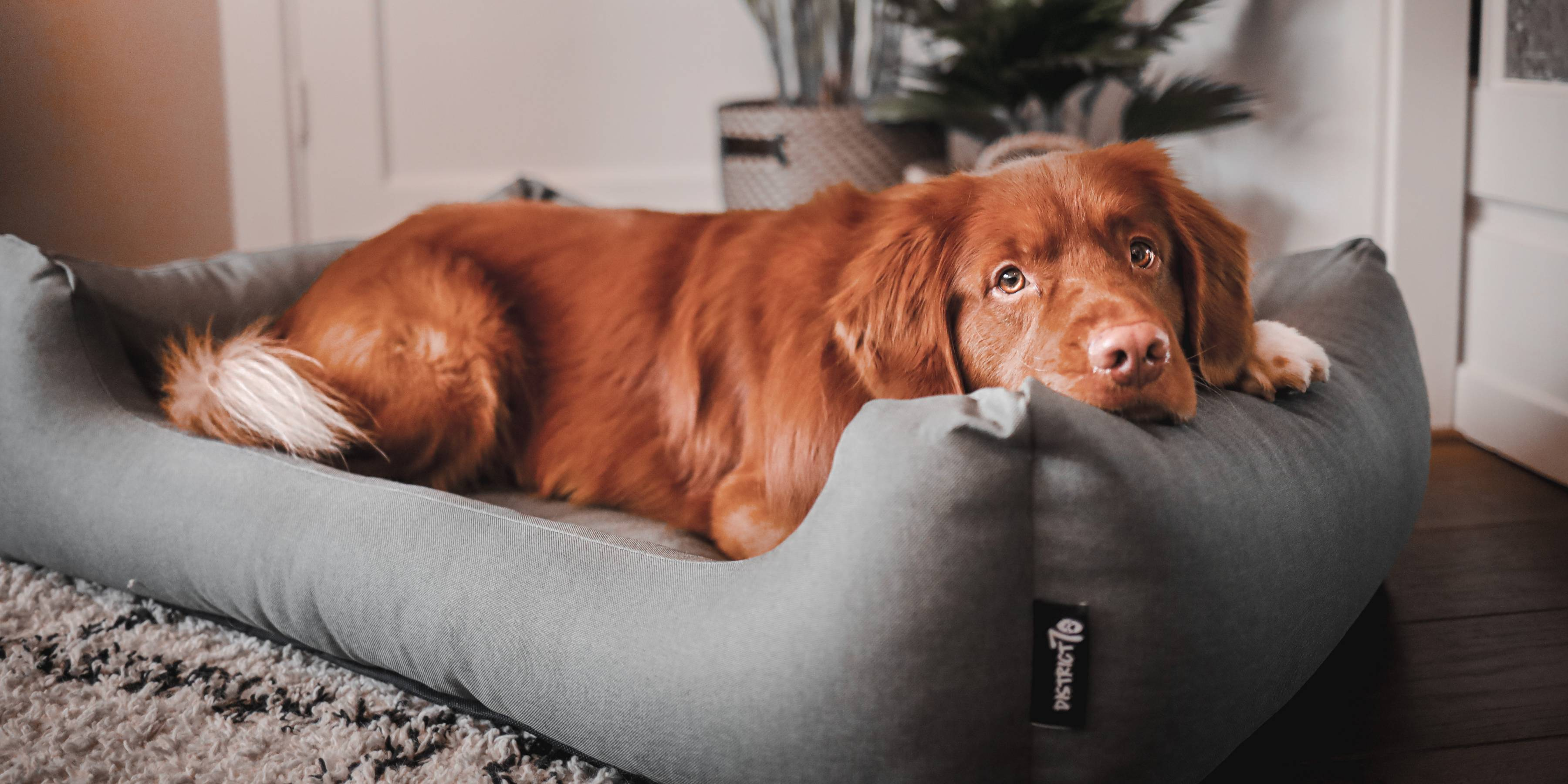 Stylish beds for your four-legged friend