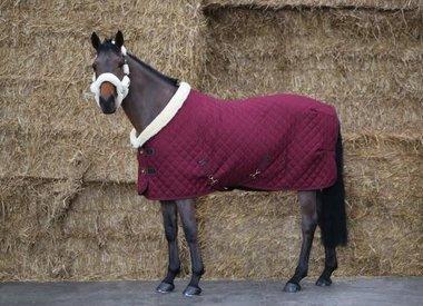 Voor het paard