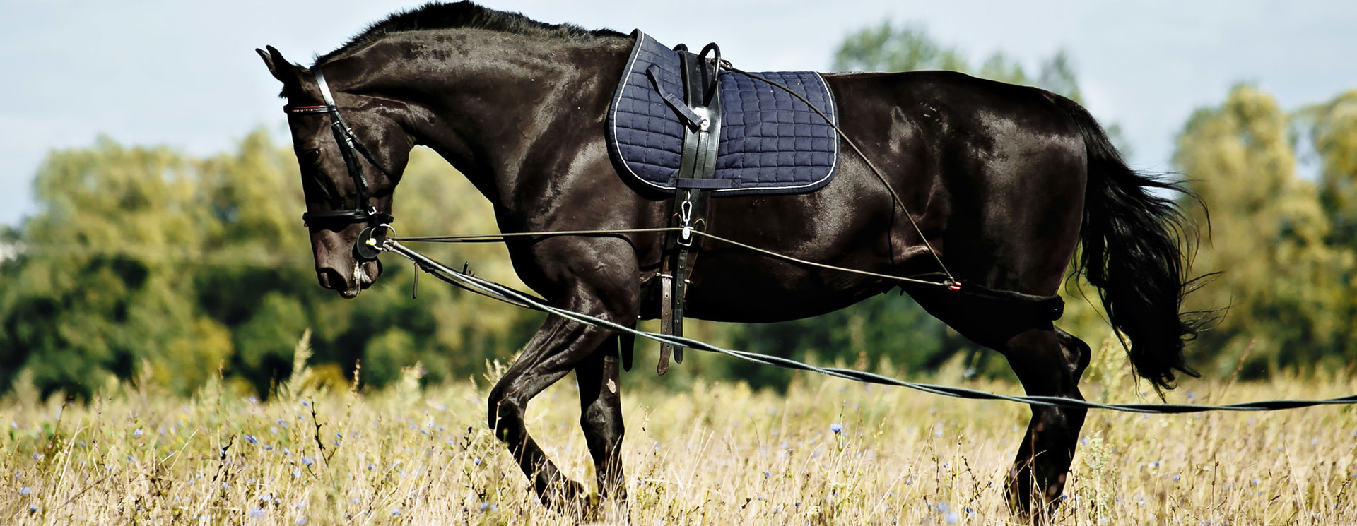 Lunging & Training Aids