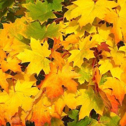 Herfst- en winterproducten