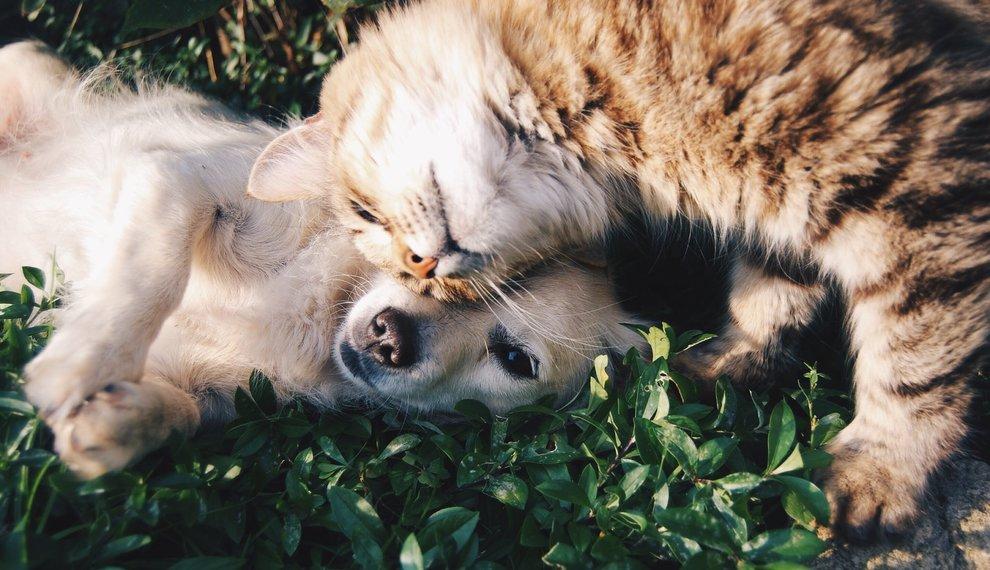 Feestdag: Doe vriendelijk dag