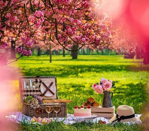 Picknickmanden voor de gezellige zomer