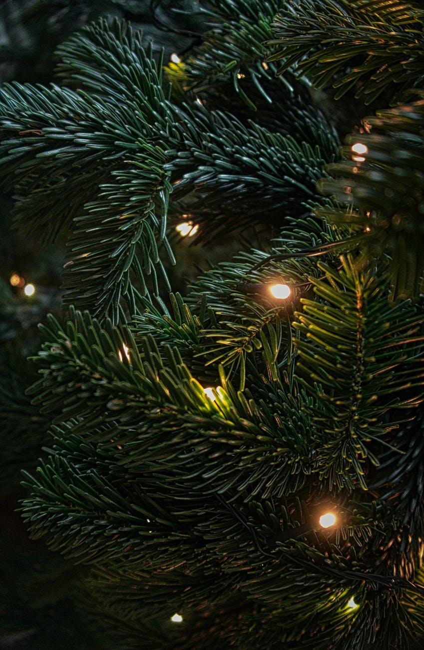 SUPER HANDIG: Dit zijn dé 6 tips om kerstverlichting op te hangen of simpel te Verwijderen