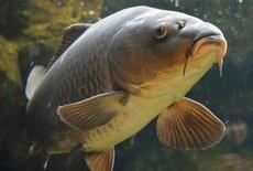 Waarom we vissen