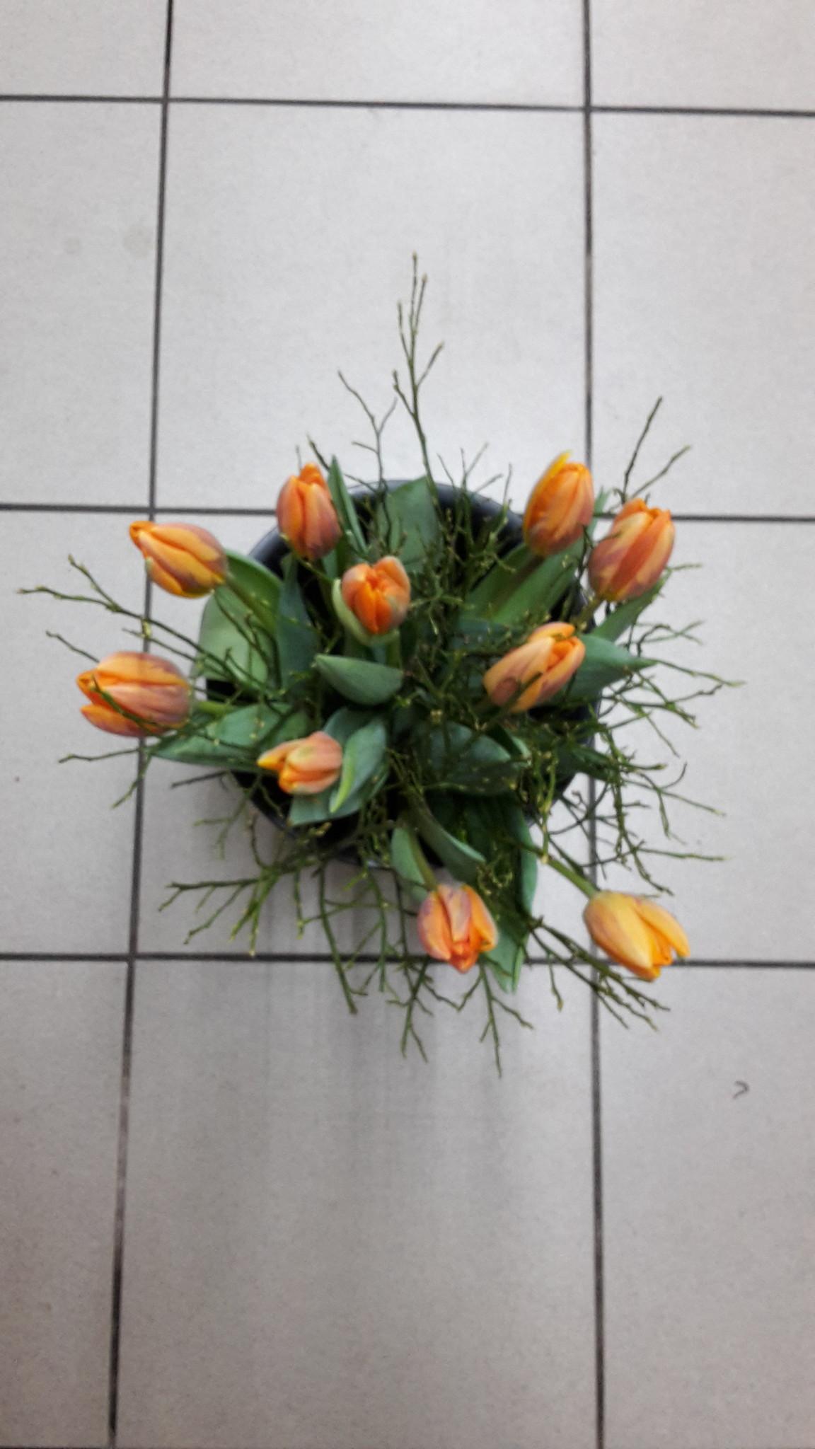 Tulpen boeket (10 tulpen en bosbes)