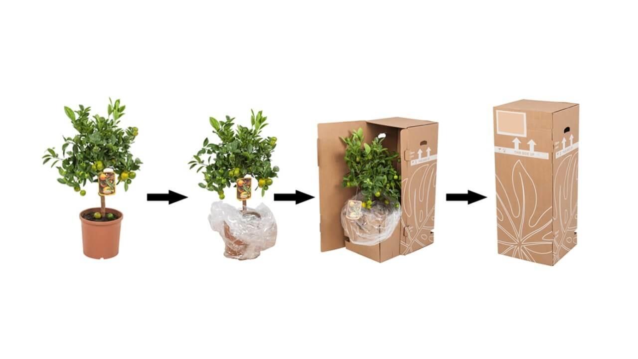 verzenden van planten