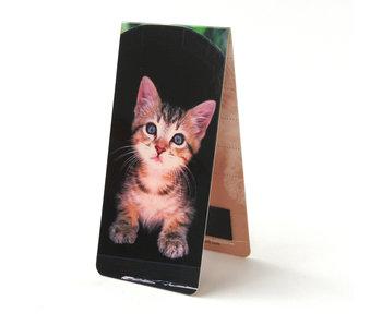 Marque-page magnétique, chaton, fond noir