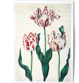 Dubbele kaart, Drie tulpen, Kunstenaar onbekend