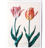 Doble tarjeta, Dos tulipanes, Van Swanenburch