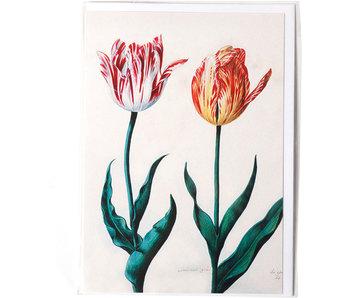 Doppelkarte, zwei Tulpen, Van Swanenburch
