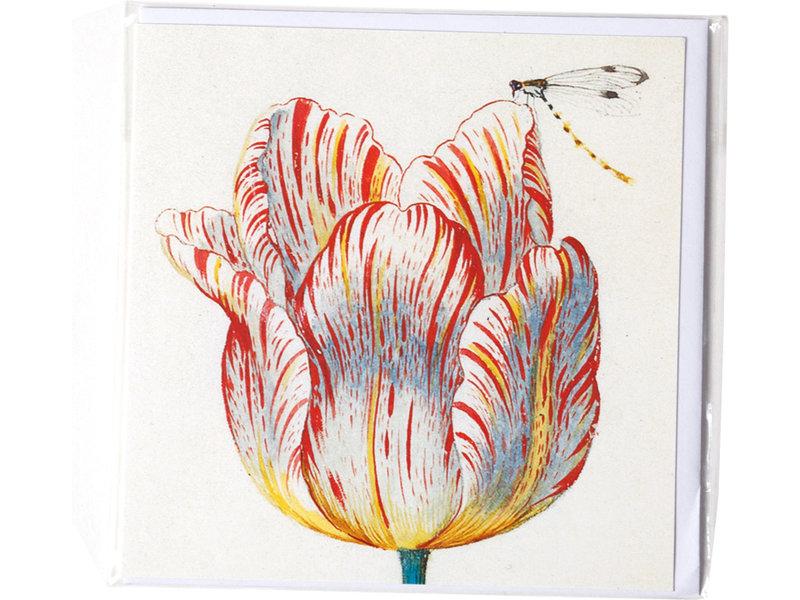 Dubbele kaart, Wit met rode tulp met insect, Marrel