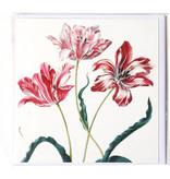 Doppelkarte, drei Tulpen, Merian, Teylers Collection