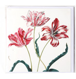 Double carte, Trois tulipes, Merian, Collection Teylers