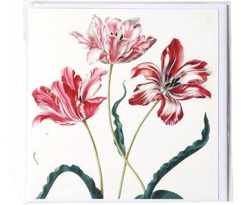 Double carte,Trois tulipes, Merian, Collection Teylers