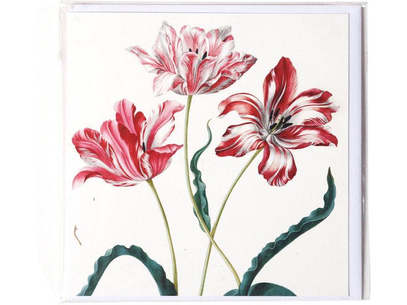 Doble tarjeta, Tres tulipanes, Merian, Colección Teylers