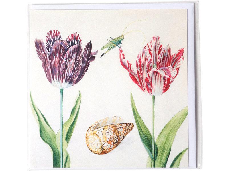 Dubbele kaart, Twee Tulpen met schelp en insect (krekel), Marrel