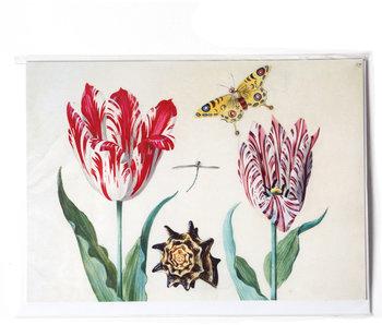 Doppelkarte, zwei Tulpen mit Muschel und Schmetterling, Marrel