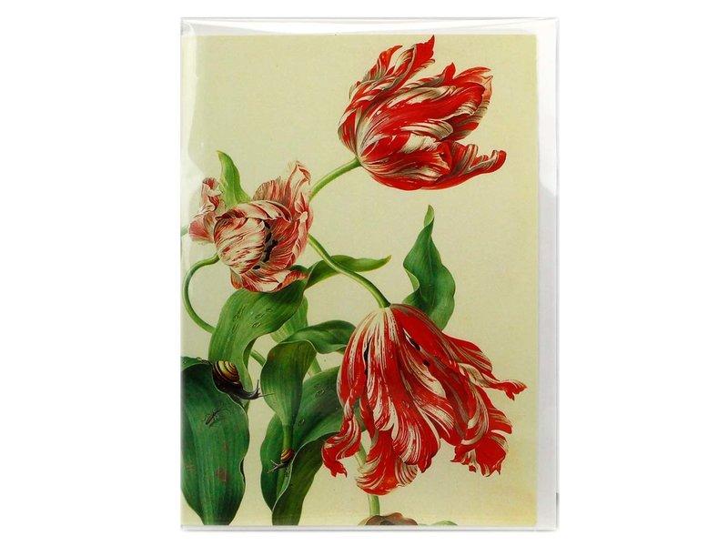 Doppelkarte, drei Tulpen, Henstenburgh