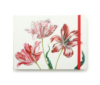 Carnet de croquis, Trois tulipes, Merian