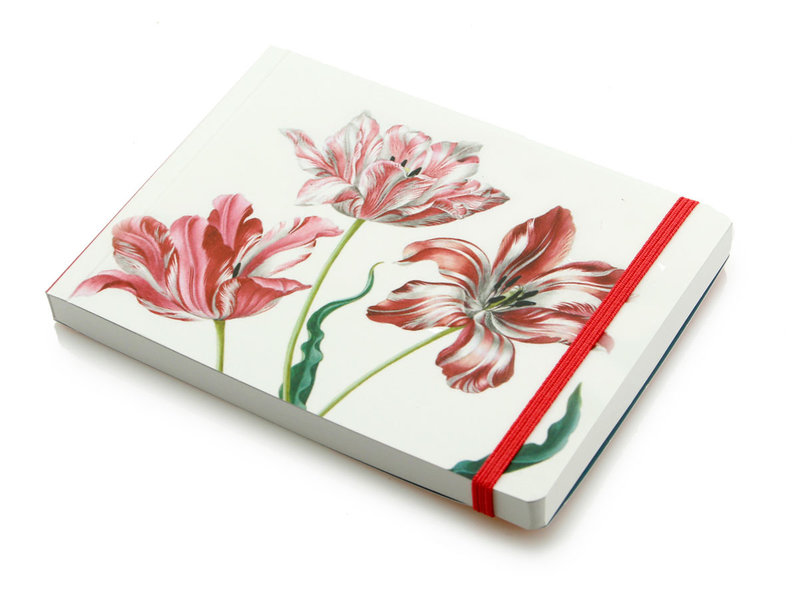 Skizzenbuch, Drei Tulpen, Merian