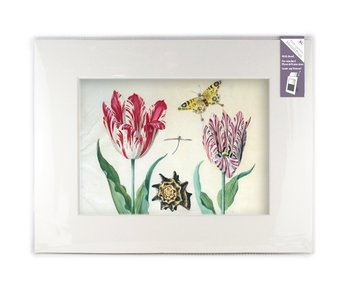 Matted prints with reproduction, XL, Two tulips with shell and insects, Marrel