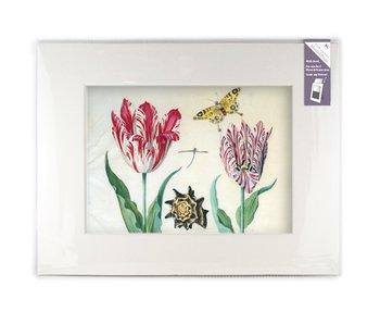 Paspartú con reproducción, XL, Dos tulipanes con concha e insectos, Marrel