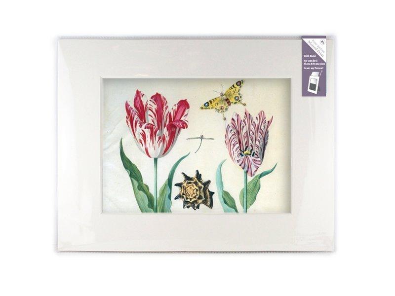 Passe-partout avec reproduction, XL, Deux tulipes avec coquille et insectes, Marrel