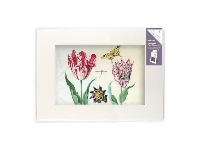 Paspartú con reproducción, L, Dos tulipanes con concha e insectos, Marrel