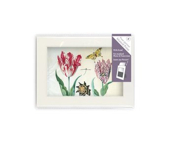 Matted prints  with reproduction, S, Two tulips with shell and insects, Marrel