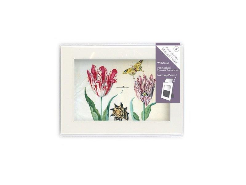 Passe-Partout mit Reproduktion, S, Zwei Tulpen mit Muschel und Insekten, Marrel