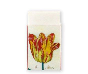 Borrador, tulipanes, marrel