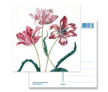 Postal, Tres tulipanes, Merian