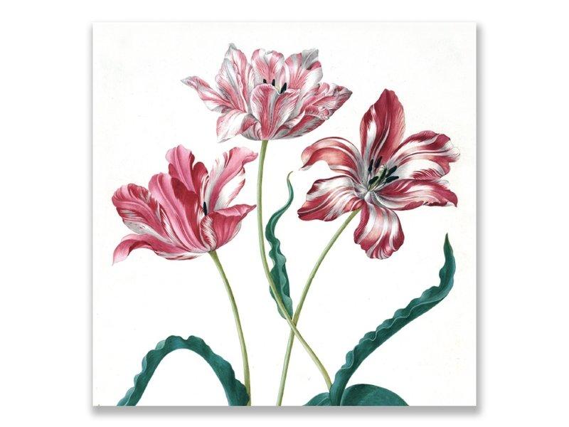 Ansichtkaart, Drie tulpen, Merian