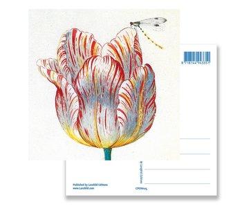 Postal, Tulipán Blanco con Insecto, Marrel