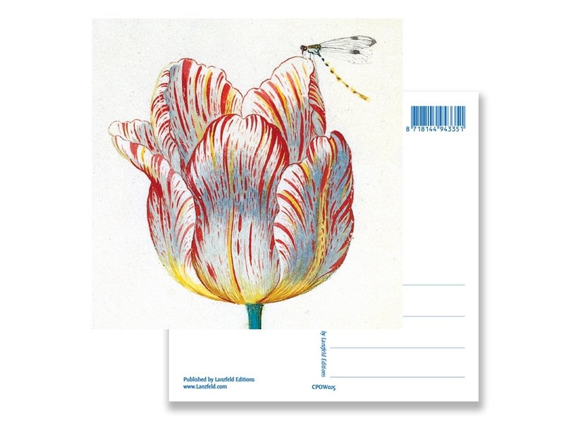 Postkarte, weiße Tulpe mit Insekt, Marrel