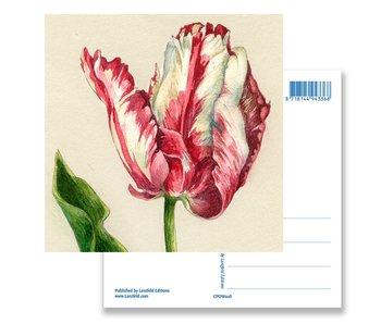 Postal, loro tulipán, Ksenia