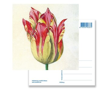 Postkarte, Gelb mit roter Tulpe, Marrel