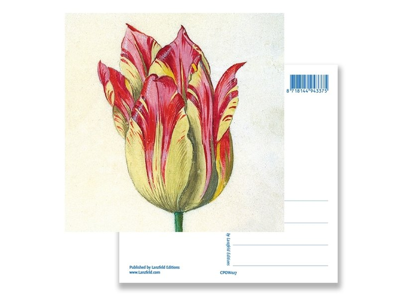 Carte postale, jaune avec tulipe rouge, Marrel