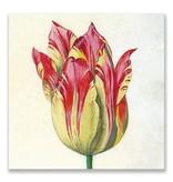 Ansichtkaart, Geel met rode tulp, Marrel