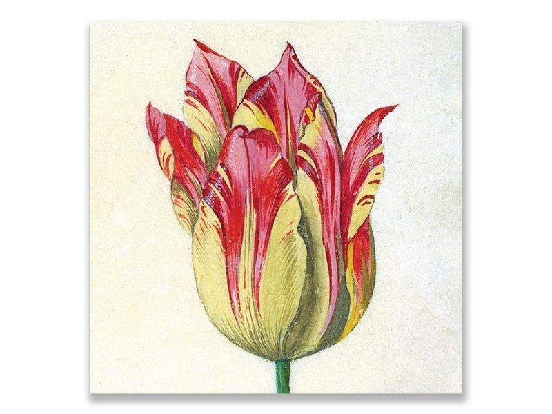 Postal, amarillo con tulipán rojo, Marrel