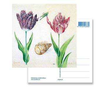 Ansichtkaart, Tulpen, schelp en insecten. Marrel