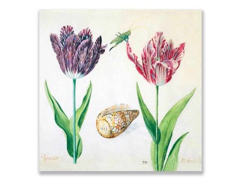 Carte postale, tulipes, coquille et insectes. Marrel