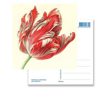 Postcard, Tulip (detail), Henstenburgh  (Teylers)