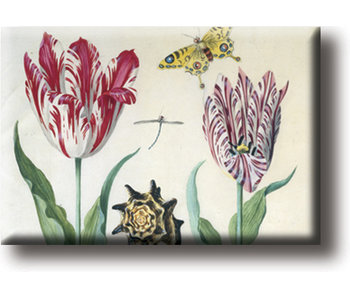 Fridge magnet, Two tulips, shell and insects, Marrel