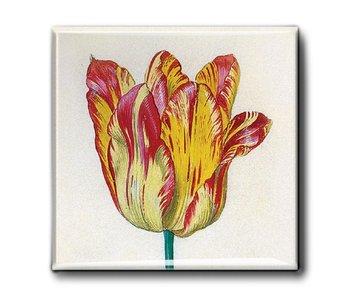 Imán de nevera, tulipán amarillo rojo, Marrel